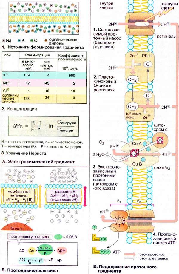 Насос протонный фото