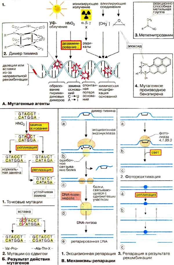 Biologie der Hemipteren: Eine