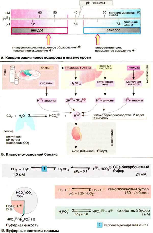 водорода в плазме крови