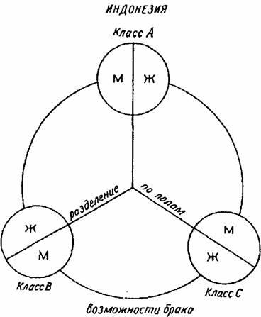Схема социальной структуры индонезийского типа.