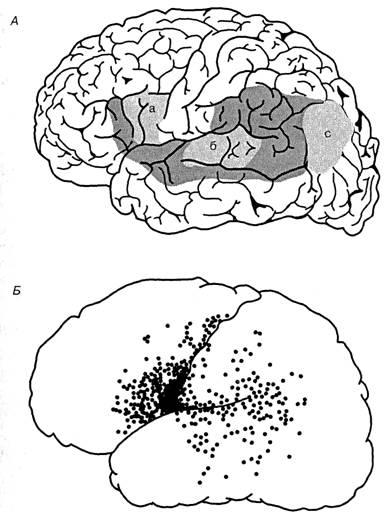 Б - области коры левого