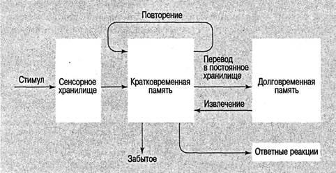 И если вы занимаетесь когнитивными моделями,не забывайте аналогию с моделью Менделеева,поскольку когнитивные модели...